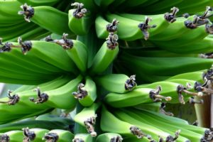 Brigadeiro de Colher com Biomassa de Banana Verde